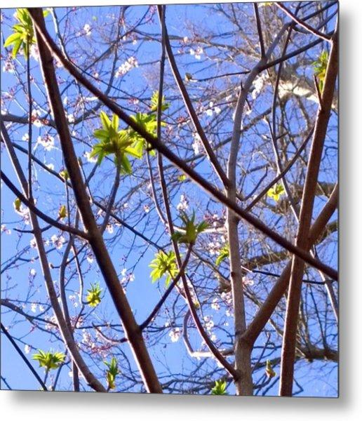 Spring Leaves #seasons #trees Metal Print