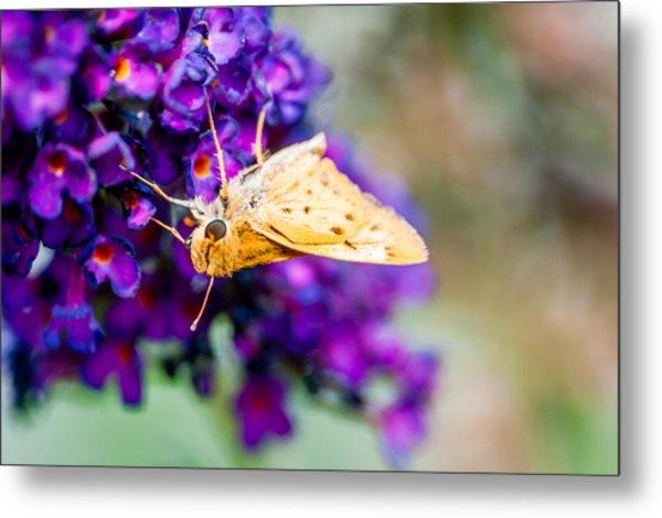 Spring Moth Metal Print