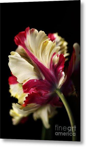 Spring Parrot Tulip Metal Print