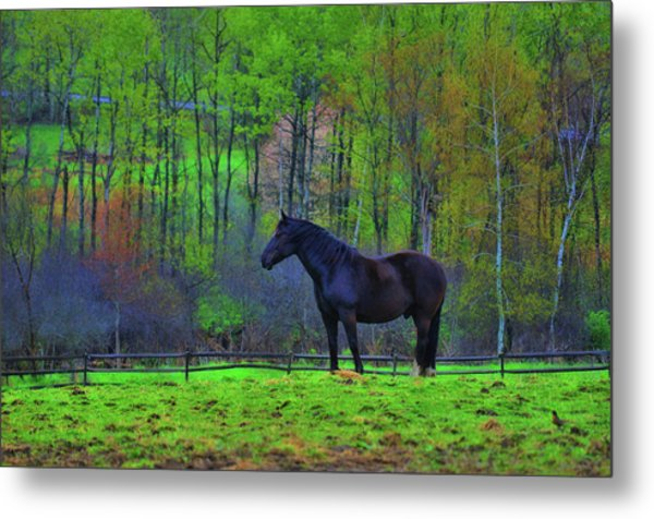 Spring Pasture Metal Print by JAMART Photography
