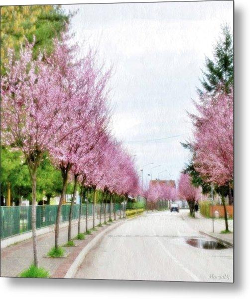 Spring Path Metal Print