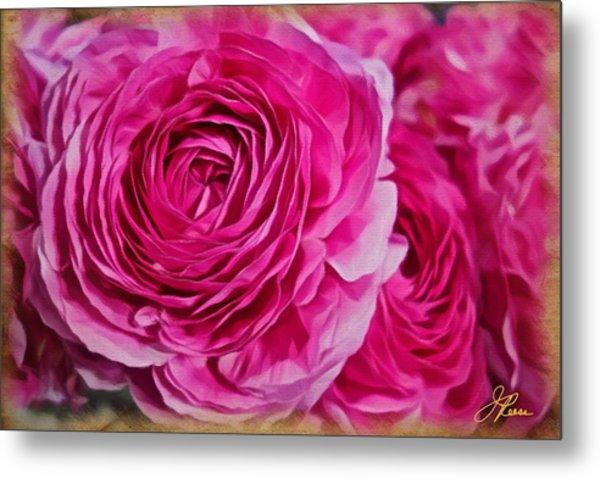 Spring Pink Roses Metal Print