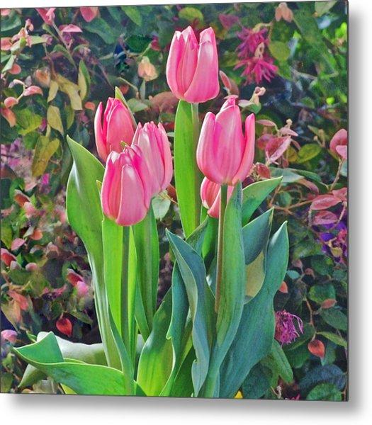 Spring Show 14 Pink Tulips  Metal Print