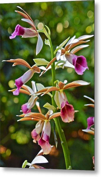 Spring Show 15 Nun's Orchid 1 Metal Print