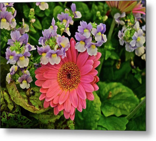 Metal Print featuring the photograph Spring Show 18 Gerbera Daisy With Snapdragons by Janis Nussbaum Senungetuk