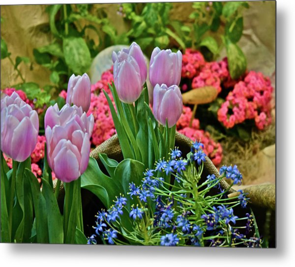 Metal Print featuring the photograph Spring Show 18 Treasures by Janis Nussbaum Senungetuk