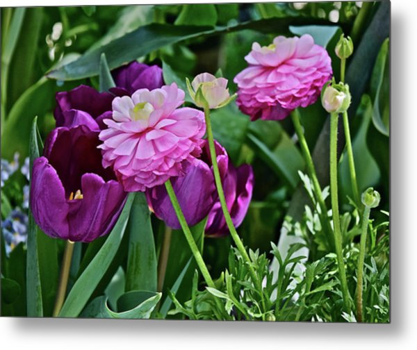 Metal Print featuring the photograph Spring Show 18 Tulips And Ranunculus by Janis Nussbaum Senungetuk