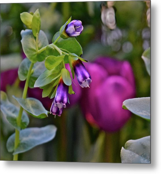 Metal Print featuring the photograph Spring Show 18 Violet Bells by Janis Nussbaum Senungetuk