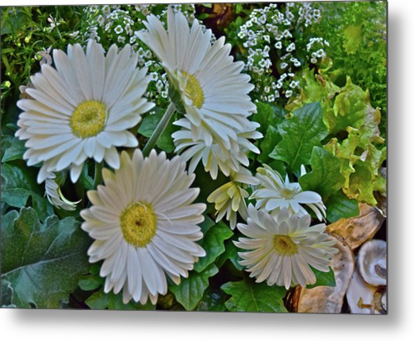 Metal Print featuring the photograph Spring Show 18 White Gerbera Daisies by Janis Nussbaum Senungetuk