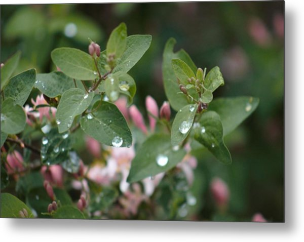 Metal Print featuring the photograph Spring Showers 5 by Antonio Romero