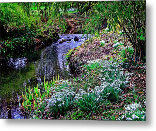 Spring Snowdrops By Stream Metal Print