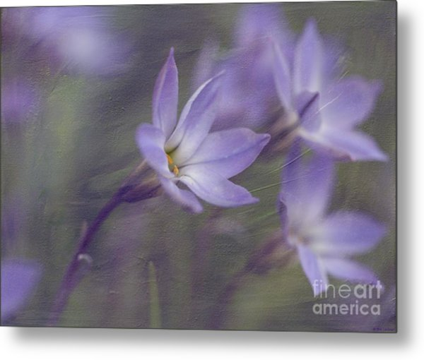 Spring Starflower Metal Print