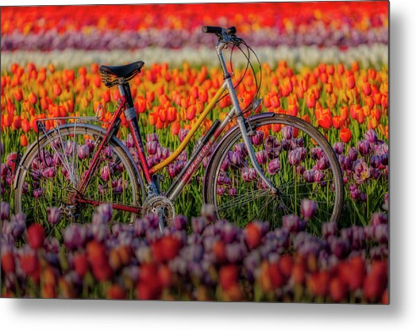 Metal Print featuring the photograph Spring Tulips And Bicycle by Susan Candelario