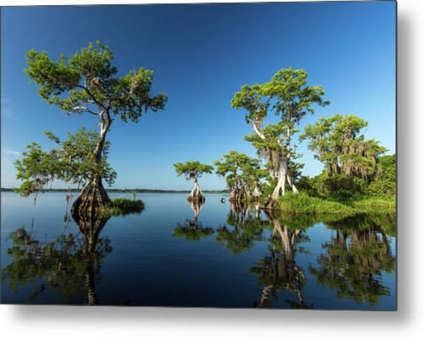 Spring Vistas At Lake Disston Metal Print