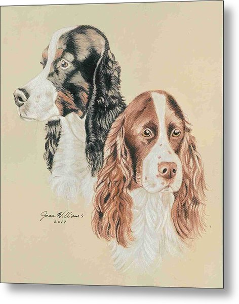 Springer Spaniels Metal Print by Joan Williams