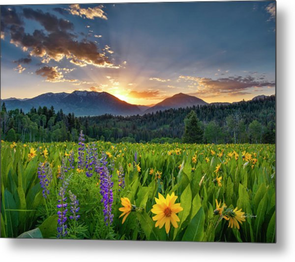 Spring's Delight Metal Print