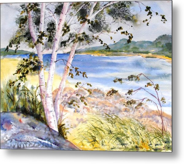 Springtime Birches Metal Print