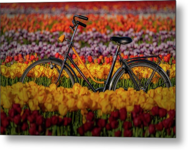 Metal Print featuring the photograph Springtime Tulips And Bike by Susan Candelario