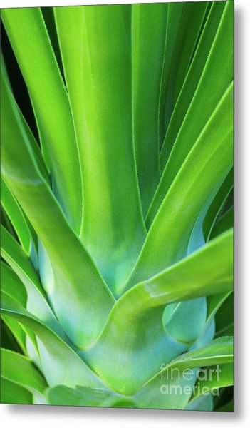 Sprout Metal Print by Steven Dillon