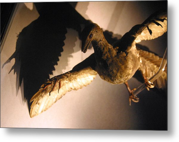 Squark Metal Print by Jez C Self