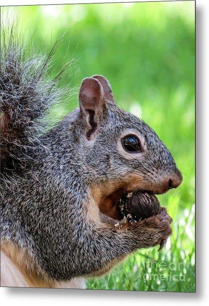 Squirrel 1 Metal Print