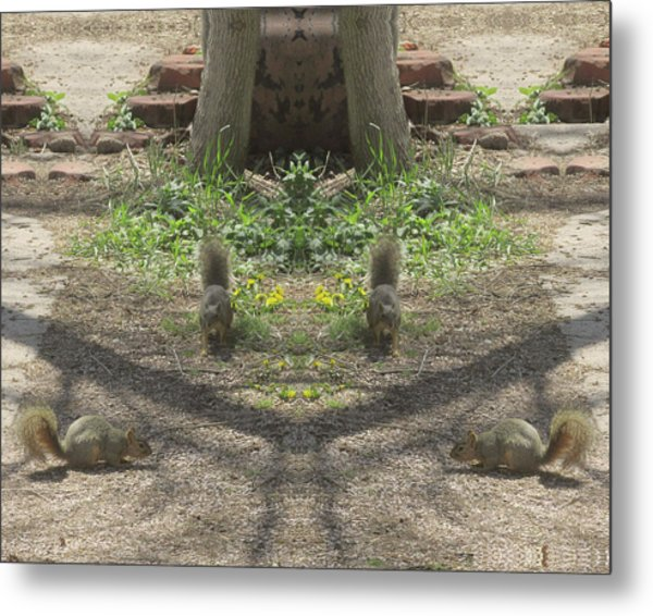 Squirrel Buddies Searching For Acorns Metal Print