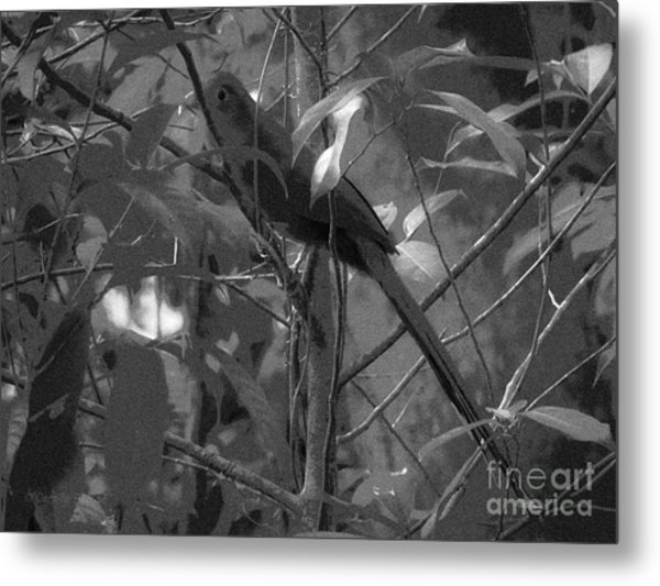 Squirrel Cuckoo  Metal Print