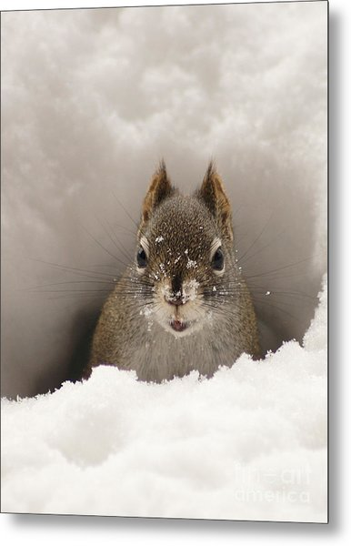 Squirrel In A Snow Tunnel Metal Print