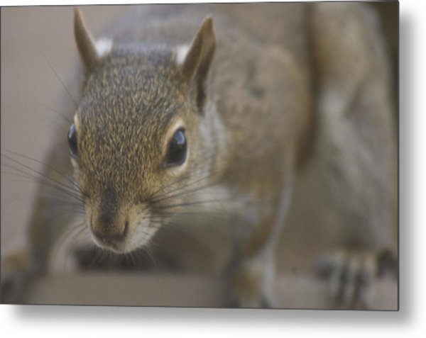 Squirrel On The Hunt Metal Print by Anthony Towers