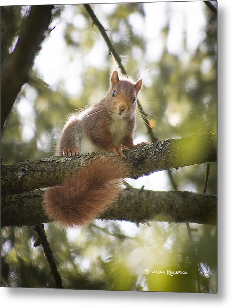 Metal Print featuring the photograph Squirrel On The Spot by Stwayne Keubrick