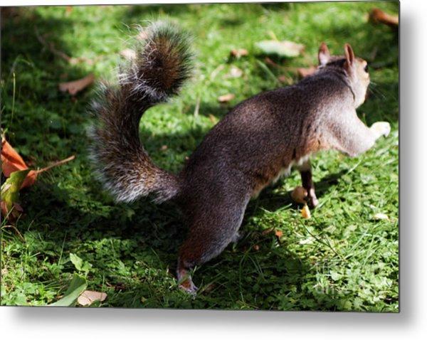 Squirrel Running Metal Print