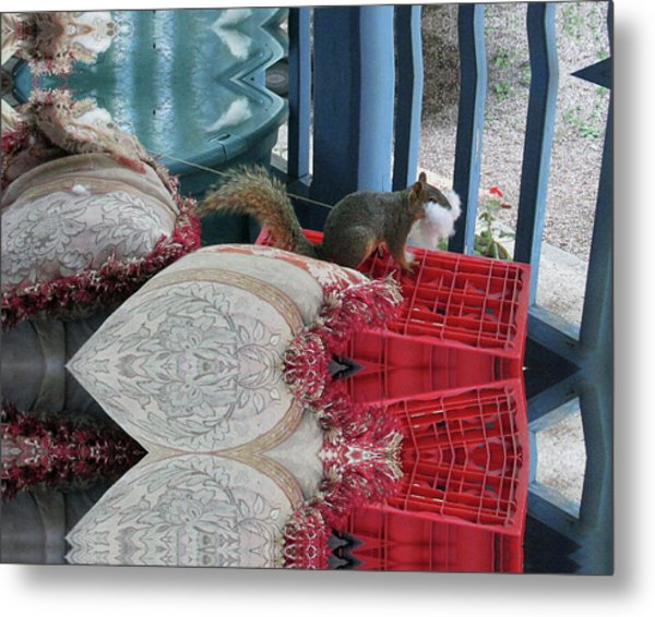 Squirrel Stealing Stuffing For A Nest Metal Print