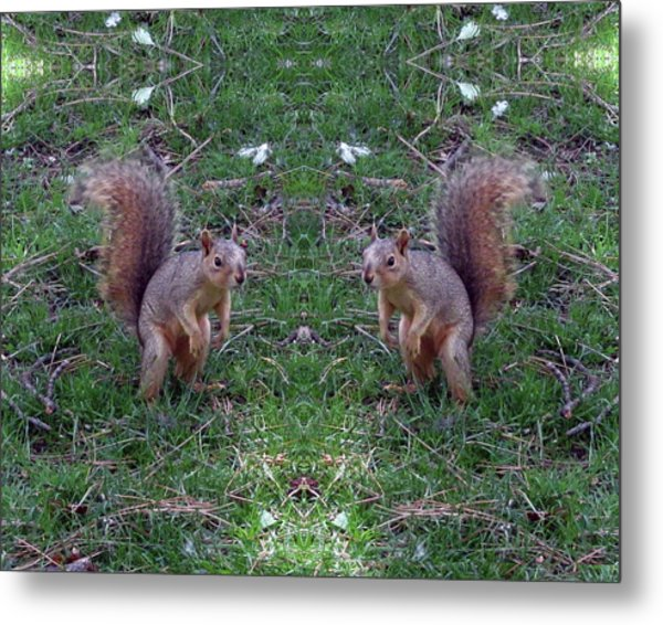 Squirrels With Question Mark Tails Metal Print