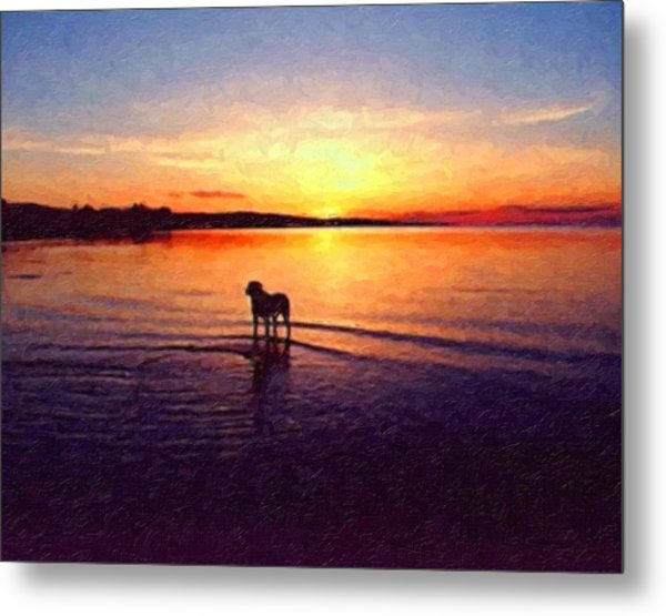 Staffordshire Bull Terrier On Lake Metal Print