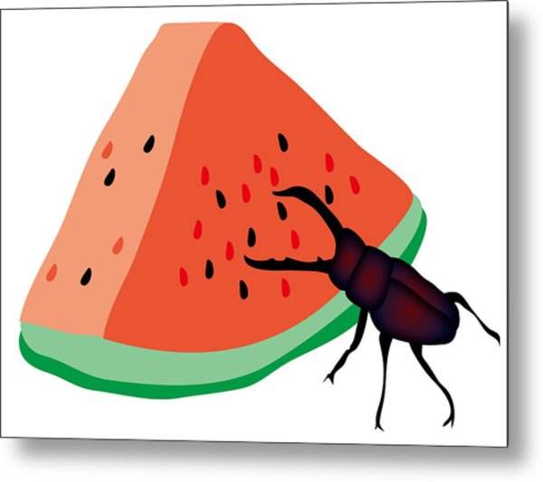 Stag Beetle Is Eating A Piece Of Red Watermelon Metal Print