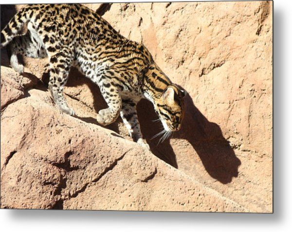 Ocelot Shadow, Arizona Metal Print