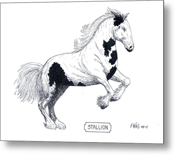 Stallion Metal Print by Frederic Kohli