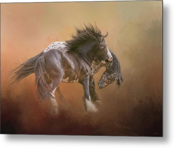 Stallion Play Metal Print