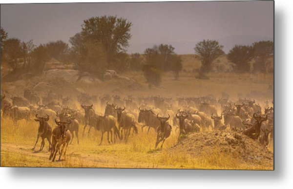 Stampede-serengeti Plain Metal Print