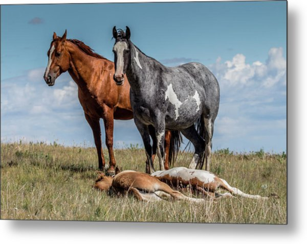 Standing Watch Over The Foals Metal Print