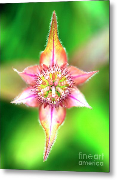 Star In Lurie Garden Metal Print by John Rizzuto