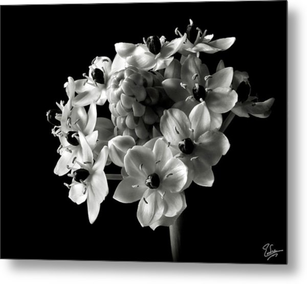 Star Of Bethlehem In Black And White Metal Print
