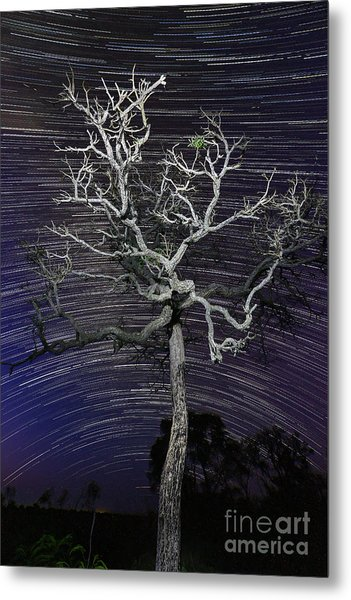 Star Trails In The Cerrado Metal Print