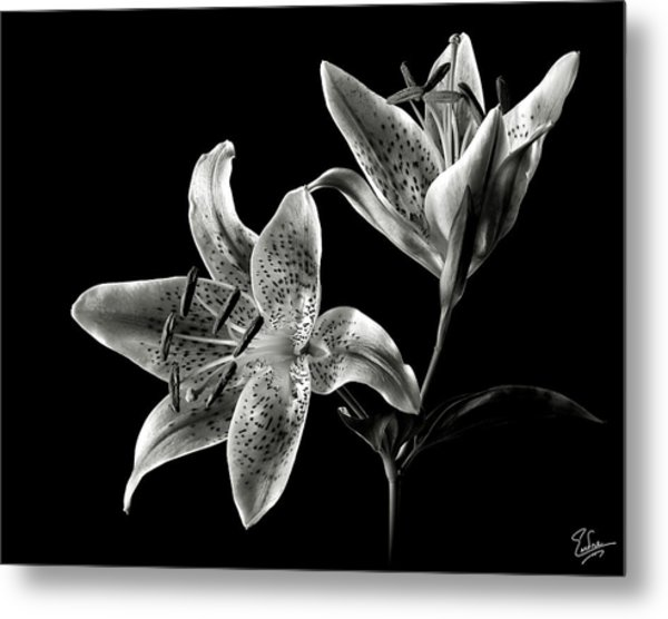 Stargazer Lily In Black And White Metal Print