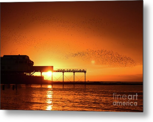 Starlings At Sunset Over Aberystwyth Pier Metal Print