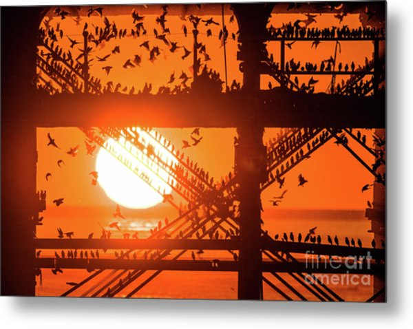 Starlings At Sunset Under Aberystwyth Pier Metal Print