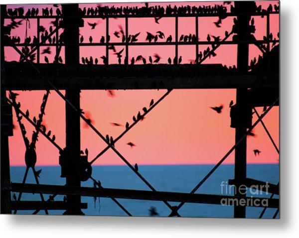 Starlings Under Aberystwyth Pier Metal Print