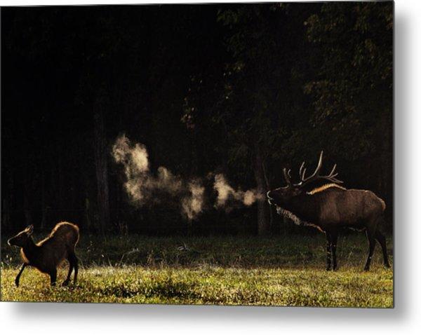 Steamy Breath Elk Bugle Metal Print