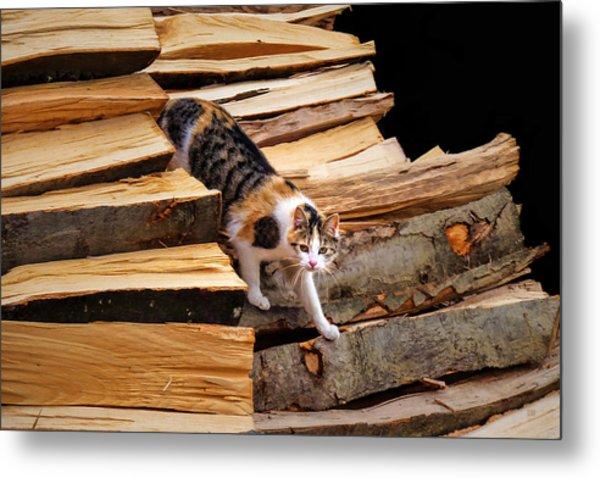 Stepping Down - Calico Cat On Beech Woodpile Metal Print by Menega Sabidussi