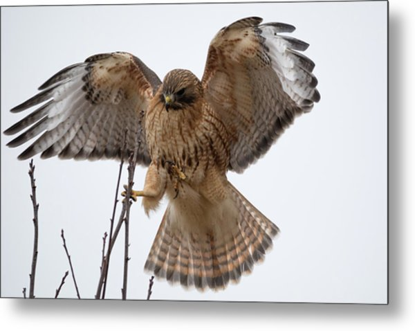 Stick The Landing Metal Print